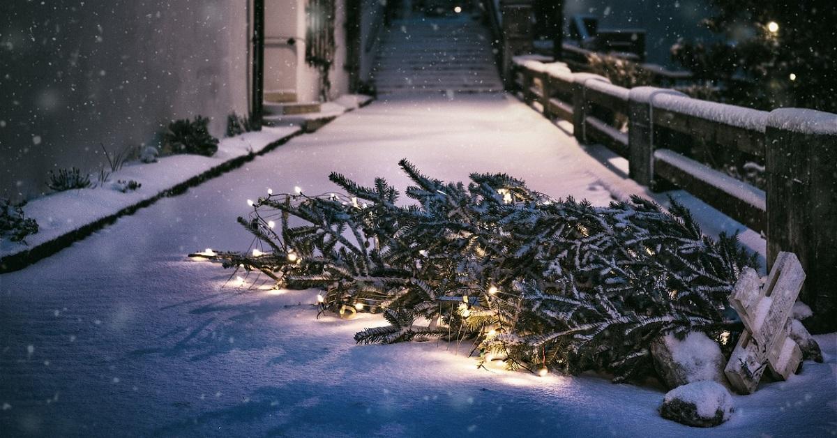 bio boom of kerstboom weggooien
